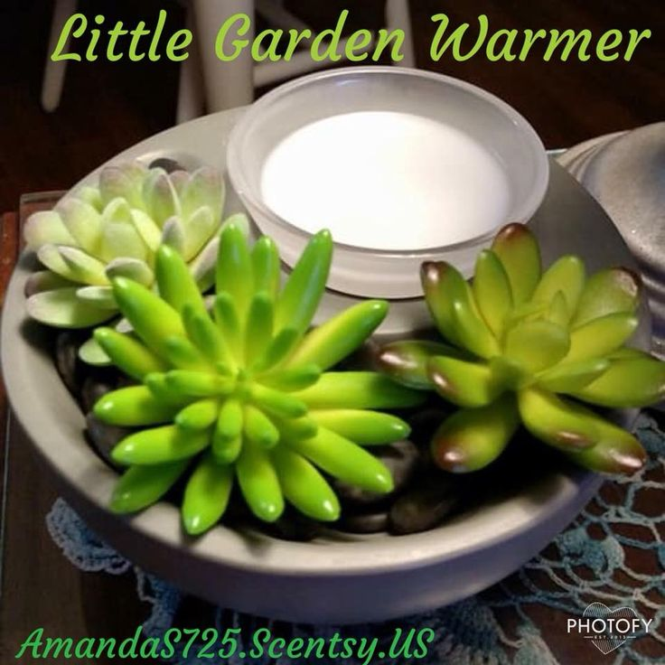 22 Best Warmers Images On Pinterest Scentsy Diffusers And Natural Oil
