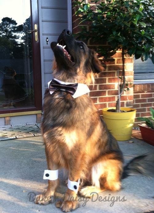 Pet Wedding Fashion - Paws-itively Stylish Inspiration