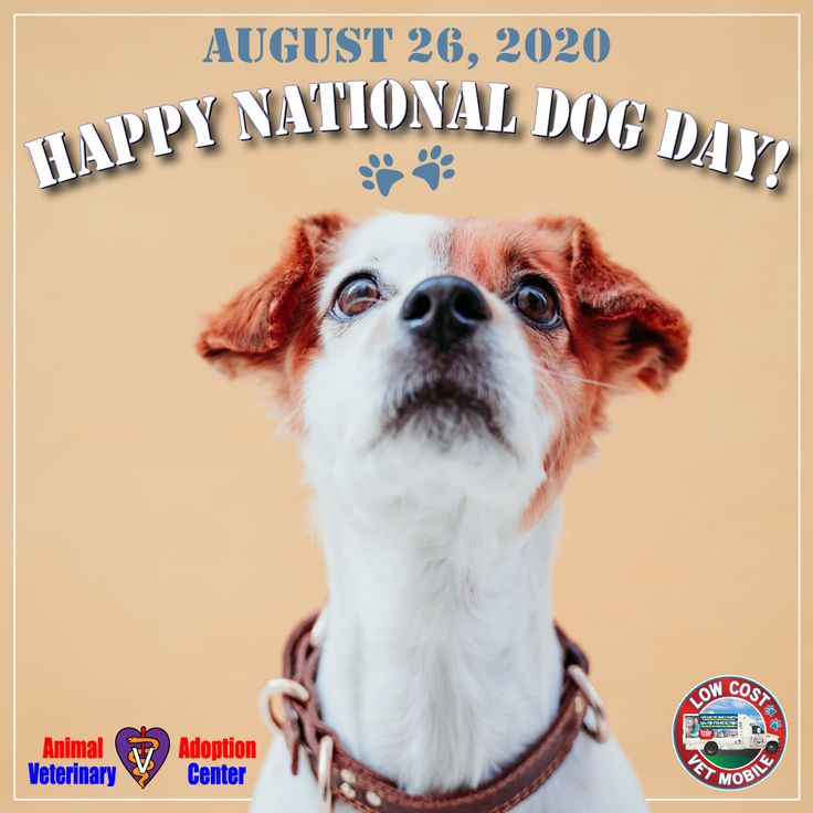 Happy National Dog Day! in 2020 Happy national dog day