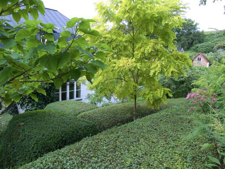 Välklippta liguster häckar i kontrast med fria former, vackert blickfång i Gunnar Martinssons trädgård på Ven