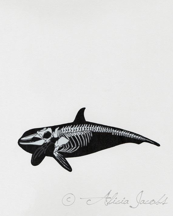 Whale Skeleton Diagram Screenprint by aliciasartifactory on Etsy, $20.00