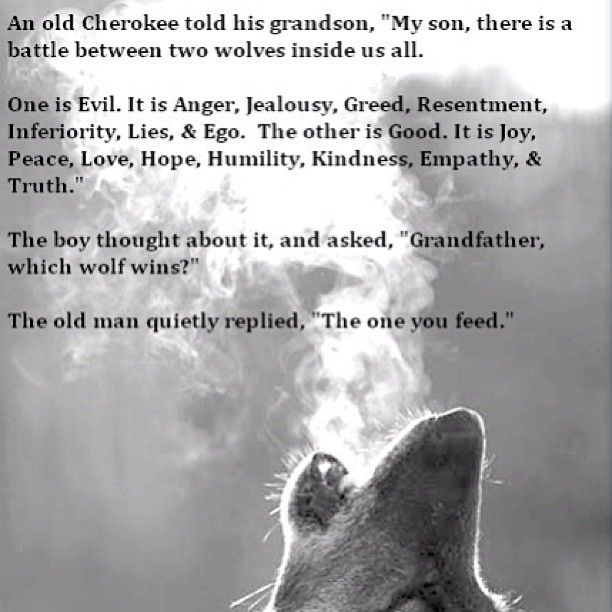 Anger Management Quotes Wallpaper Which Wolf Do You Feed Quote Saying Wise Wisdom