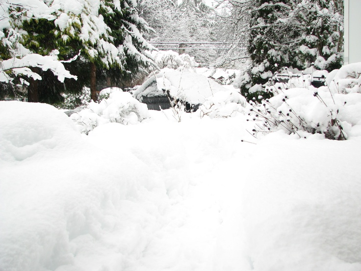 An unusual winter in North Vancouver, BC