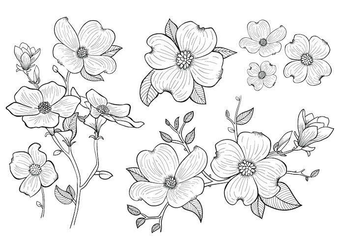 1001 Images De Dessin De Fleur Pour Apprendre A Dessiner