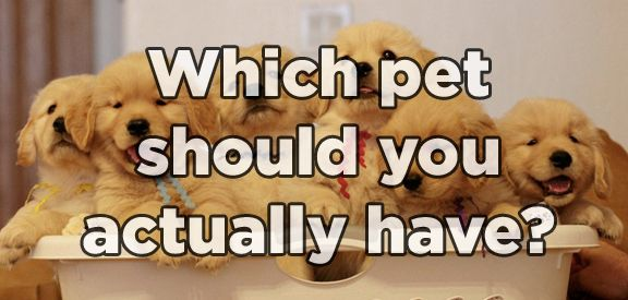 Which Pet Should You Actually Have? - Found via Buzzfeed - Please feel free to share your results!