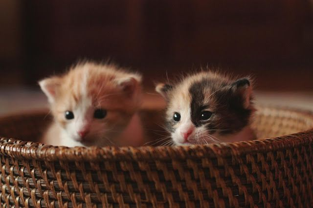 photo by Satu Laaninen 2015, two kittens in a basket