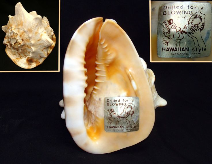 Vintage conch shell-hawaiian conch shell-drilled for blowing conch shell-ala makana hawaii conch shell-vintage  tiki room-polynesian room by BECKSRELICS on Etsy