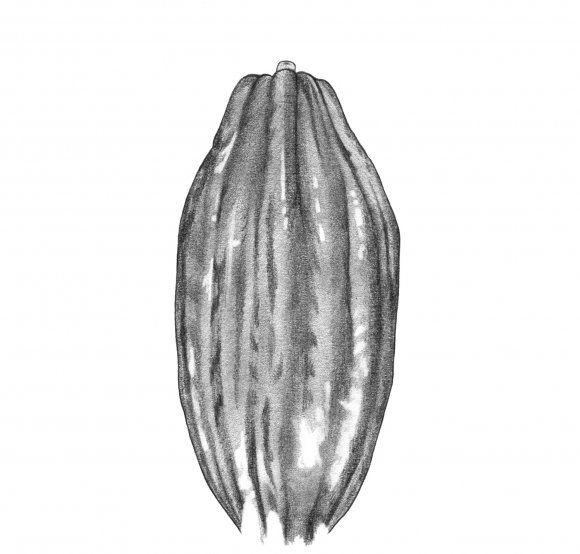 Using nothing but these beans and organic Brazilian cane sugar, Rasmus Bojesen created Oialla chocolate.