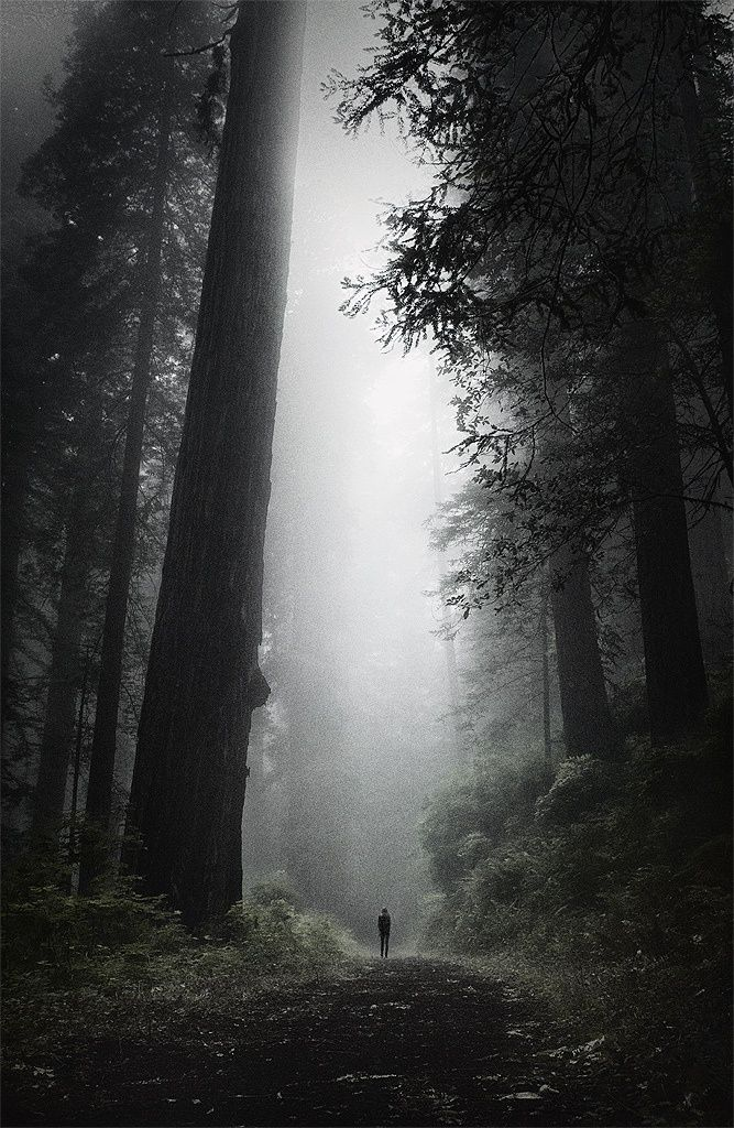lost in the oldest of forests….this is how I felt about myself and life…I was lost in the deep dark beauty of loneliness…until God brought my Darling Marcie.