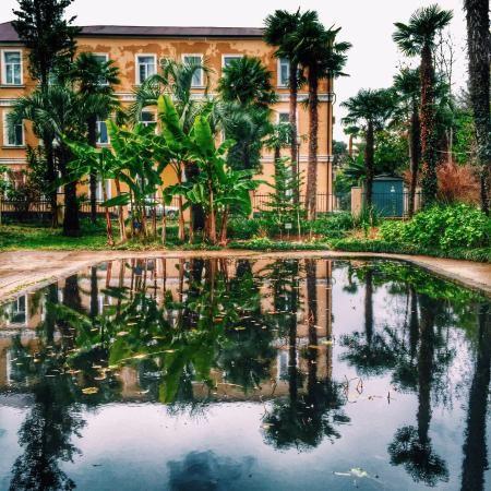 Зима в саду Sukhumi