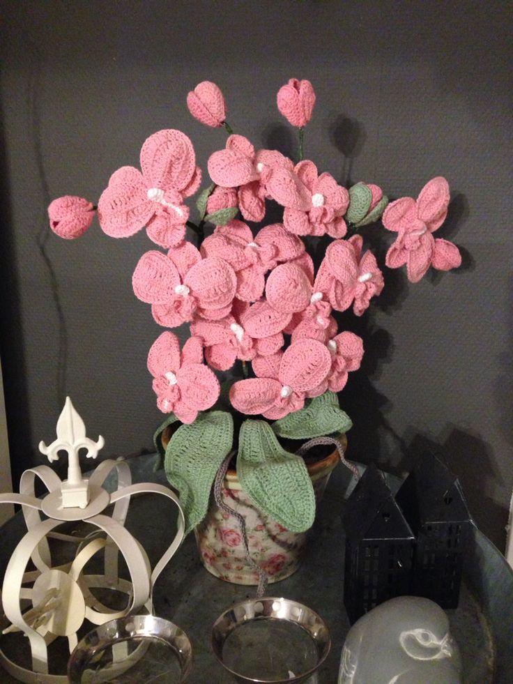 4 grenet orkide