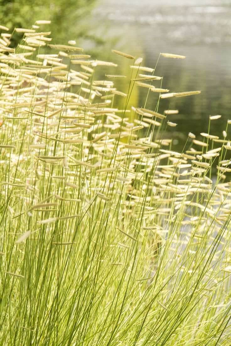 Best 25+ Types Of Grass Seed Ideas On Pinterest  Grass Seed Types, Growing  Grass And Types Of Grass
