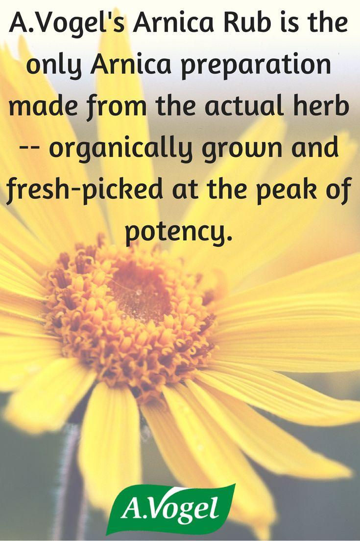 #avogel #arnica #herb #organicallygrown