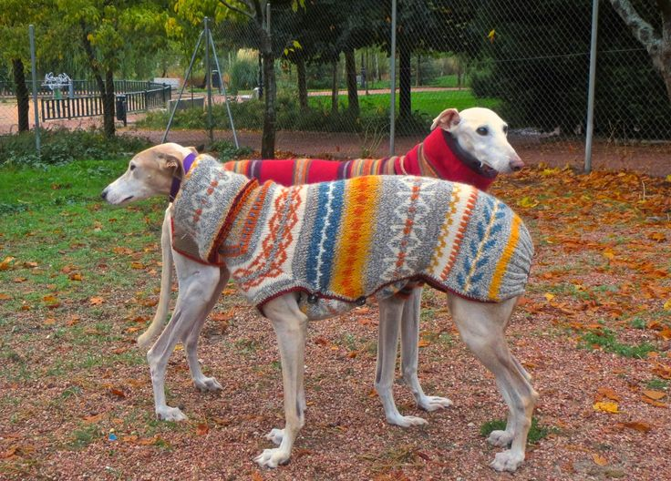 I would love to purchase one of these coats!! Unfortunately, the directions for creating the coat is in a foreign language ;-( badulake de ana: ABRIGO PARA GALGO CON UN JERSEY VIEJO