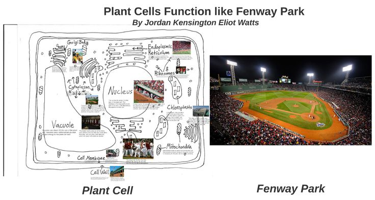 Best 12 cell analogy images on Pinterest Cell analogy, Life