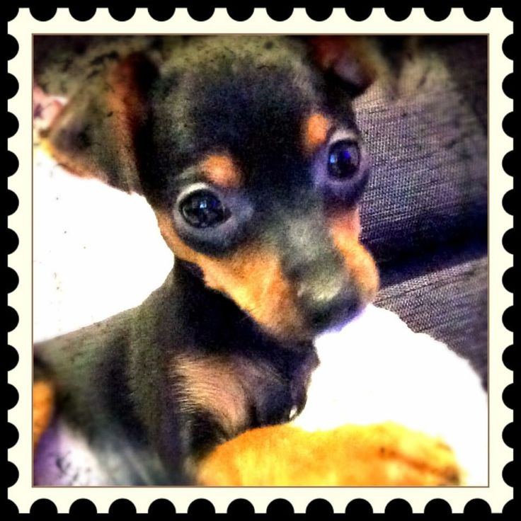 So cute, love min pins!