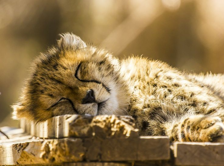 Sleeping Beast by paresh pisipati on 500px