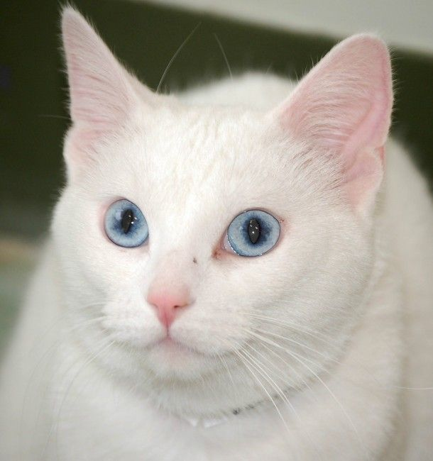Like this cat