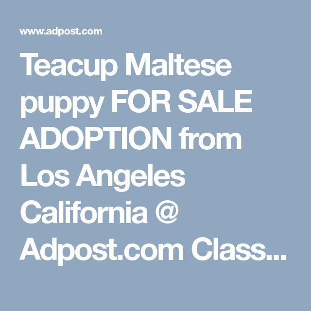 Teacup Maltese puppy FOR SALE ADOPTION from Los Angeles California @ Adpost.com Classifieds > Ireland > #10807 Teacup Maltese puppy FOR SALE ADOPTION from Los Angeles California ,free,irish,classified ad,classified ads