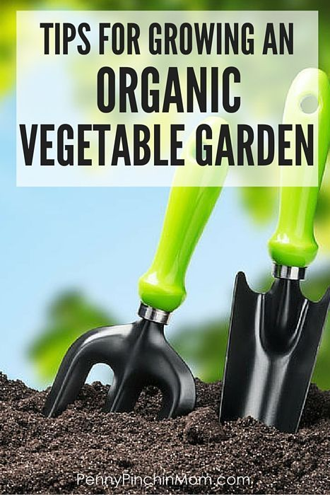 Want an organic garden? Read these MUST KNOW tips before you begin planning and planting!