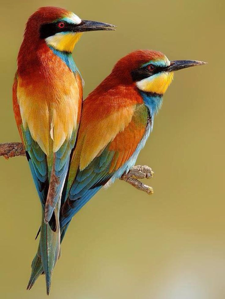 54 Best Multi Colored Birds Images On Pinterest