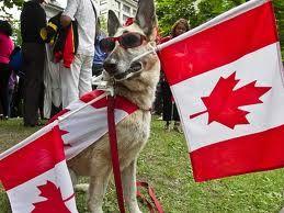 Happy Canada Day Dog