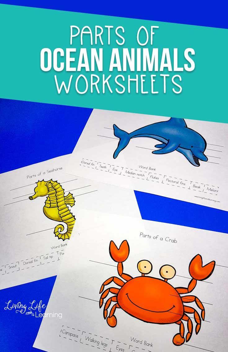 Parts Of Ocean Animals Worksheets Animal Worksheets Ocean Animals Preschool Science Activities For Kids [ 1135 x 735 Pixel ]