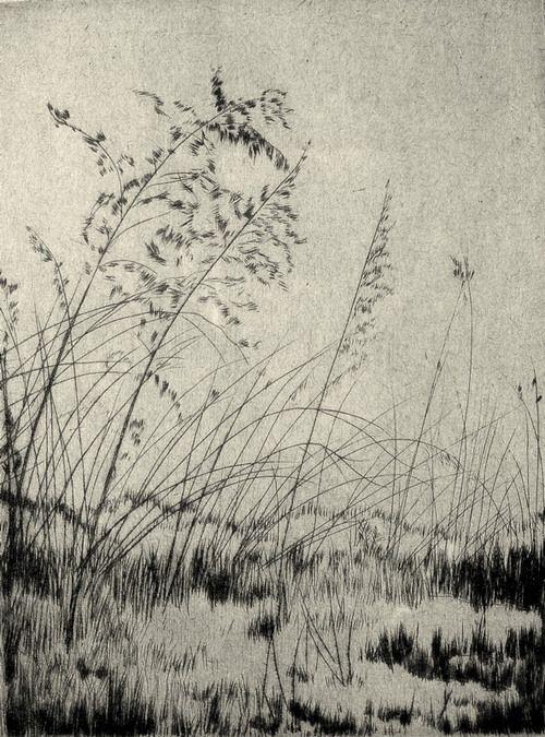 yama-bato:  Lyman Byxbe, etching, 1933 http://lymanbyxbemyblog.wordpress.com/weed-lace/