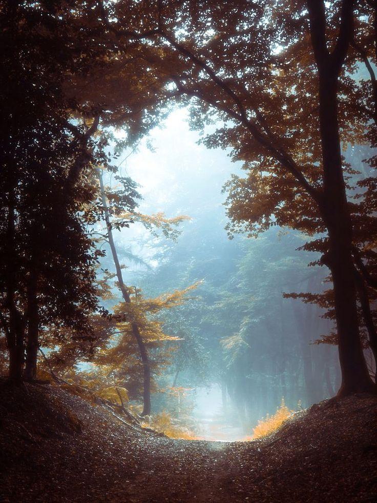 Into The Light by Erik de Jong on 500px