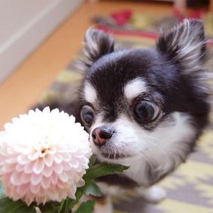 holy crap. flower.