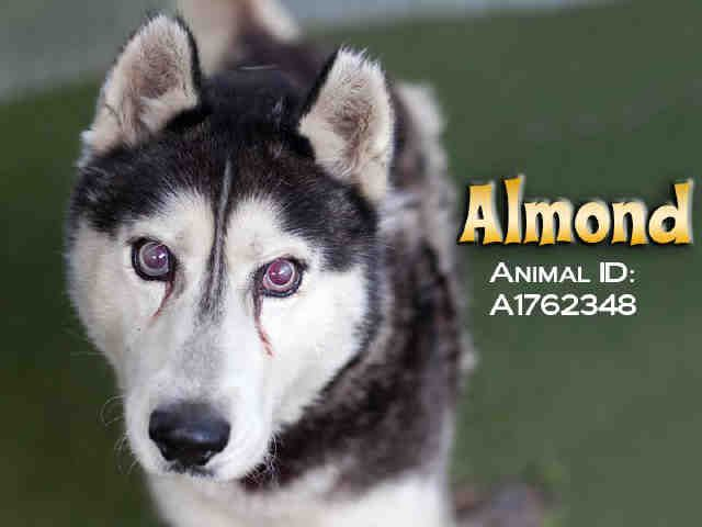 Senior Almond Id A1762348 My Name Is Almond And I Am An