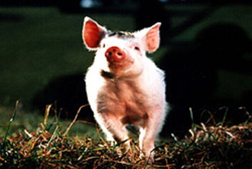 Piggy adventure
