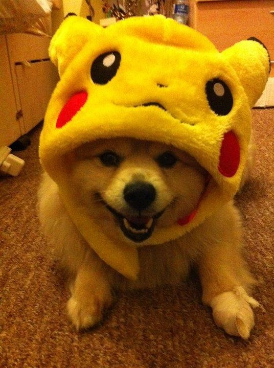 dog dressed up as pikachu cute animal pictures pinterest