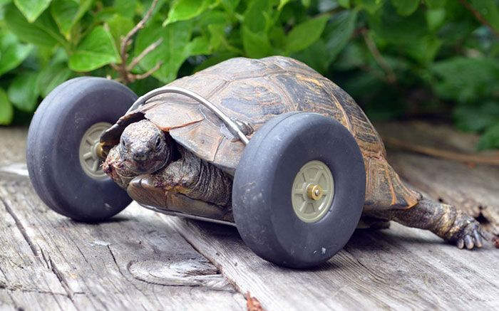 #Story, #Tortoise, #Wheels
