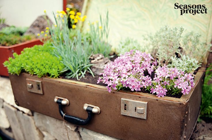 Seasons of life / march-april issue 2013.  Garden. Tbilisi, Georgia #seasonsproject #seasons #decor #nature #flower #bag