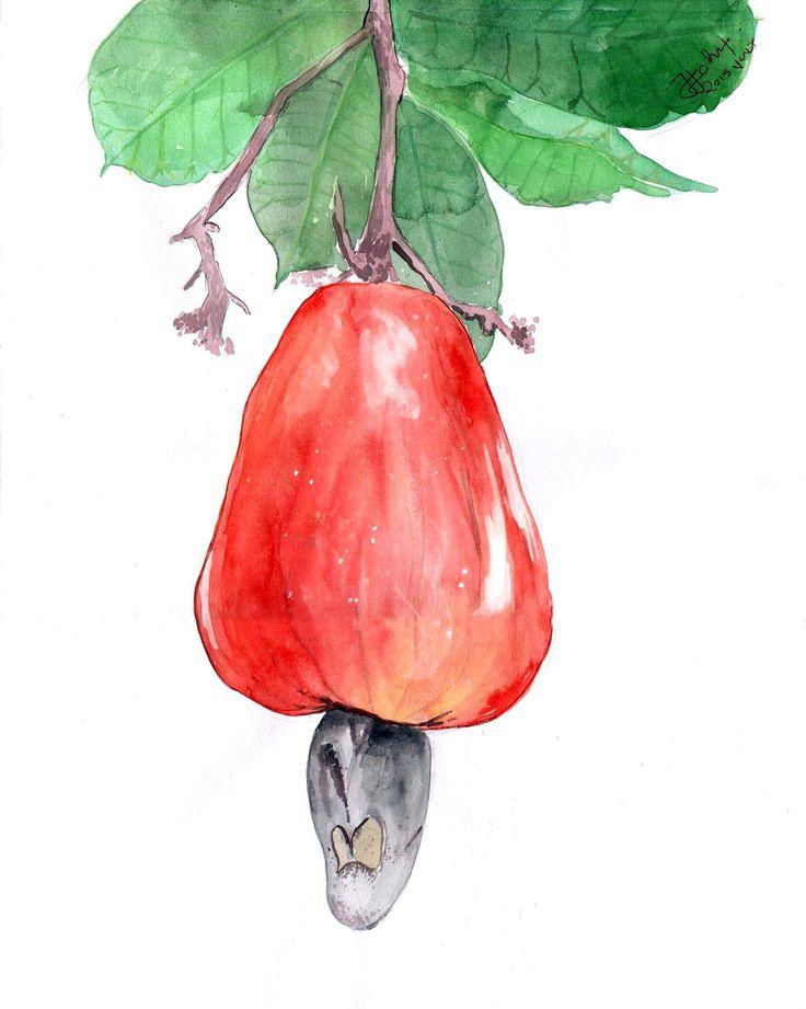 Cashew Fruit Water Colour