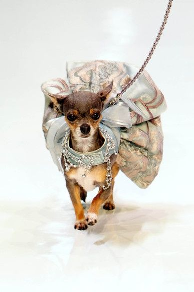 Yes....every dog needs a couture outfit. (via Dog and Fashion El Paseo 2013 Fashion Week in Palm Desert, CA via Puppy love ♥ | Pinterest)