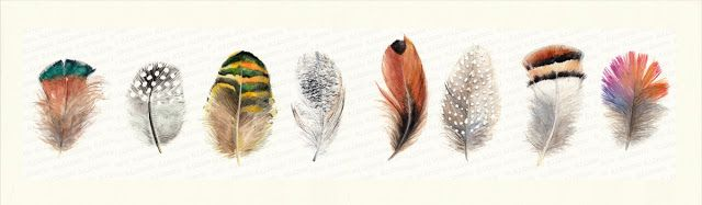 Bunch of feathers