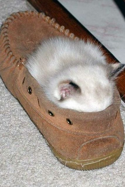 17 pets who just really, really love shoes