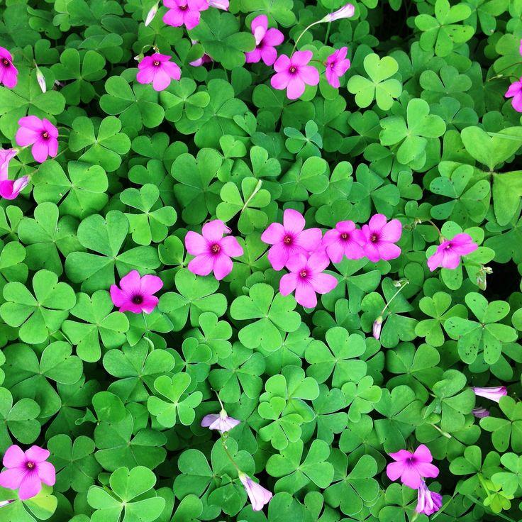 Piccoli fiori delicati...