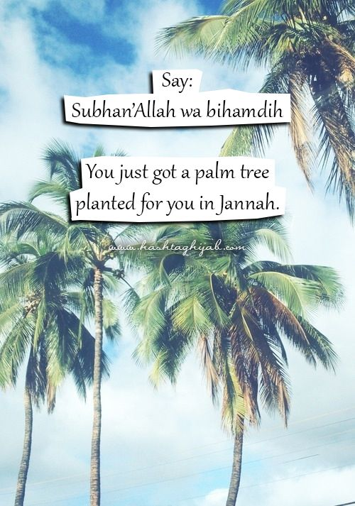 Islamic IMG: Palm Tree   http://hashtaghijab.com