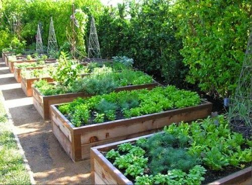 Raised Beds in a Kitchen Garden | Content in a Cottage