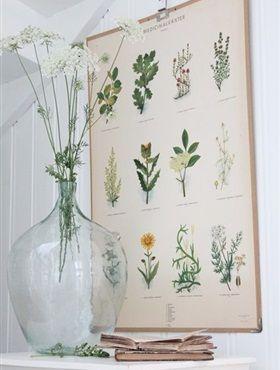 Vroeger hingen Botanische prints vooral in klaslokalen en musea, nu zijn ze ook overal in het interieur te vinden. Je kunt de trend op verschillende manieren in huis halen; behang een muur, hang een poster op of creëer een echte eyecatcher door een stoel met een botanische stof te bekleden.