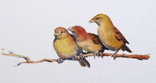Pájaros. Acuarela.