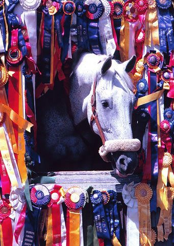 I just love this picture of Snowman and all his ribbons. From plow horse to show jumping superstar!