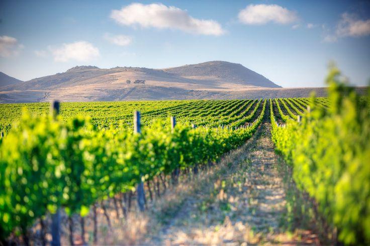 Enjoy the beautiful rolling fields of Cape Town's most prestigious wine farms on #MountZionTours #WinelandsTour