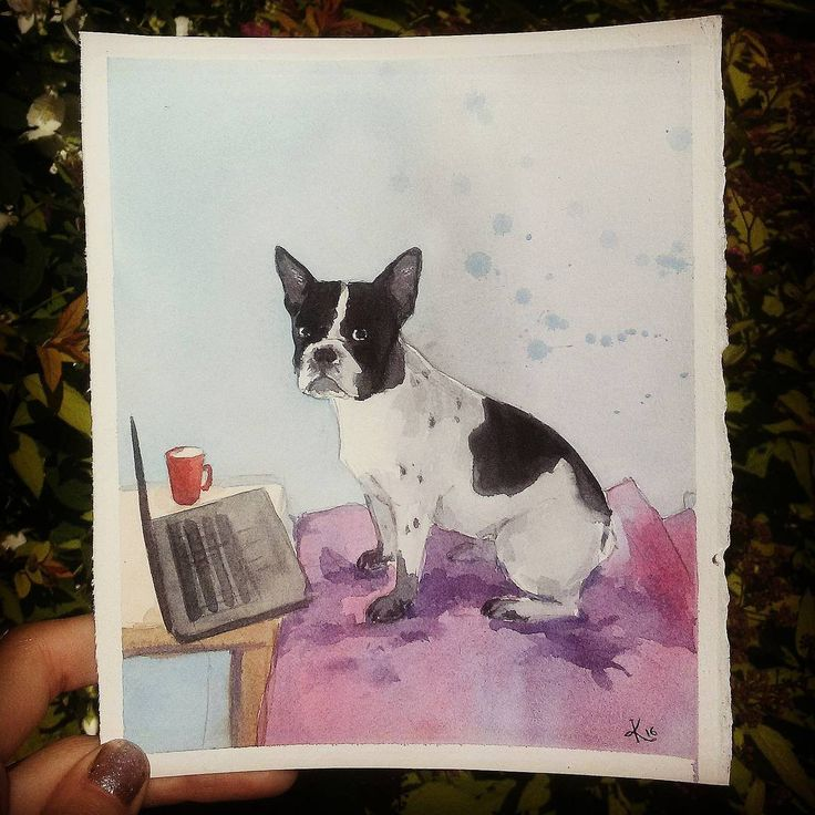 Hello  fabriano boston terrier sketching  watercolors watercolours bulldog