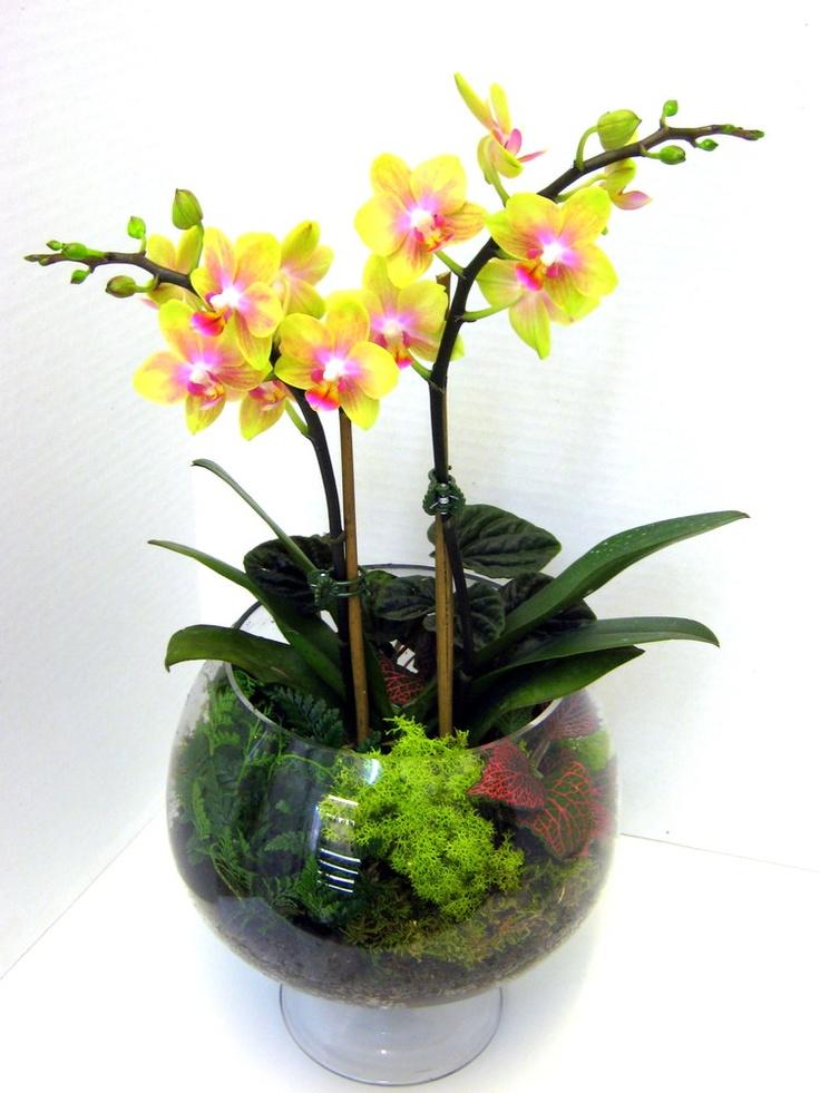 Brandy Snifter Orchid Terrarium