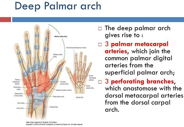 112 best A. Q Rabbi Physio Knowledge images on Pinterest ...