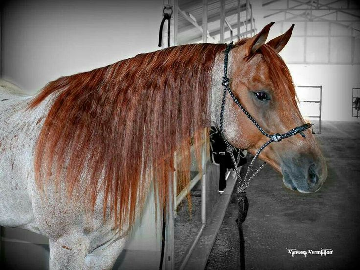 GORGEOUS roan horse!!. Please also visit www.JustForYouPropheticArt.com for colorful, inspirational art and stories. Thank you so much!